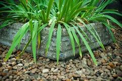 Vieux pot en pierre et feuillage vert Photographie stock libre de droits