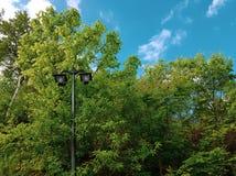 Vieux réverbère en parc parmi les cimes d'arbre et les buissons verts photographie stock
