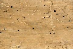 Vieux rondin avec des trous de ver de bois Image libre de droits