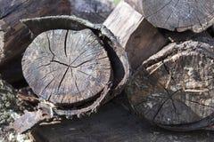 Vieux rondins de décomposition Photo libre de droits