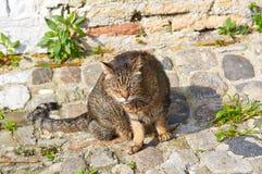 Vieux rouge en difficulté avec somnoler gris de chat Photographie stock libre de droits