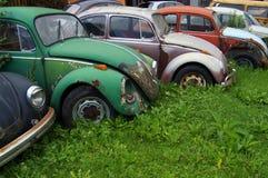 Vieux scarabées abandonnés de Volkswagen Images libres de droits