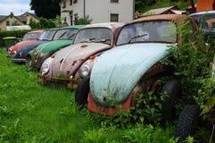 Vieux scarabées de rouillement Volkswagen Images stock