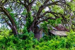 Vieux Shack abandonné caché dans le Texas photo libre de droits
