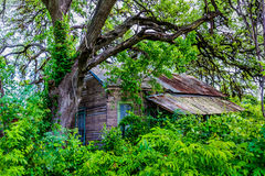 Vieux Shack abandonné caché dans le Texas images stock