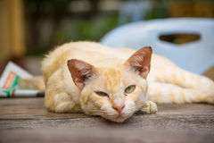 Vieux sommeil de chat Images libres de droits