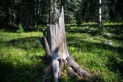 Vieux, superficiel par les agents tronçon d'arbre dans un pré herbeux et ensoleillé avec les wildflowers dispersés photos stock