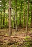 Vieux support d'arbre de chasseur profondément dans la forêt au bord de la traînée de jeu photos stock