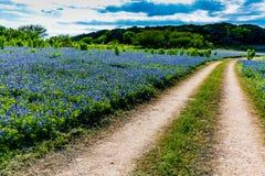 Vieux Texas Dirt Road dans le domaine de Texas Bluebonnet Wildflowers images stock