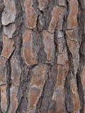 Vieux Texas Tree Trunk photographie stock