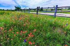 Vieux Texas Wooden Fence et Wildflowers photos stock