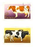 Vieux timbres-poste de Pologne Photo libre de droits