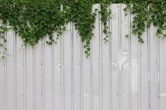 Vieux toit de feuillard avec la plante verte de lierre Images libres de droits