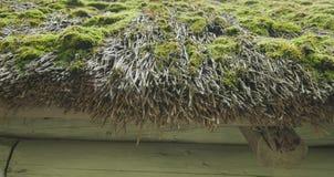 Vieux toit des roseaux, couvert de la mousse, plan rapproché Image stock