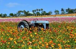 Vieux tracteur rouillé dans le jardin du rannunculus Photographie stock