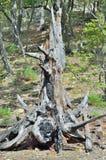 Vieux tronçon 2 Photos libres de droits