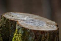 Vieux tronçon Image stock