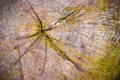 Vieux tronçon d'arbre Image stock