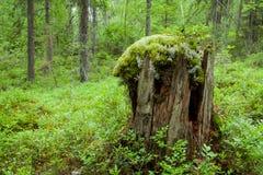 Vieux tronçon d'arbre photographie stock