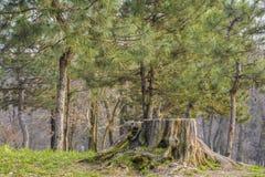 Vieux tronçon d'arbre Photo stock