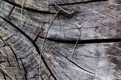Vieux tronçon d'arbre Image libre de droits