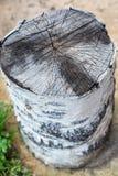 Vieux tronçon d'arbre Photos libres de droits