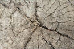 Vieux tronçon d'arbre de vue supérieure photo stock