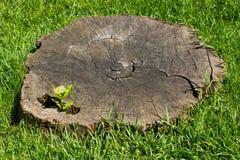 Vieux tronçon d'arbre entouré par l'herbe Photos stock