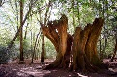 Vieux tronçon d'arbre mort Photos libres de droits