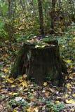 Vieux tronçon dans les bois Photos stock