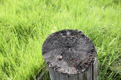 Vieux tronçon de vue supérieure en nature sur l'herbe Image stock