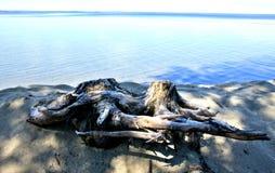 Vieux tronçon deux sur le lac Image stock