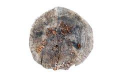 Vieux tronçon en bois gris d'isolement sur le fond blanc Arbre réduit rond avec les anneaux annuels comme texture en bois photo libre de droits