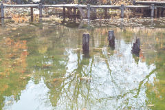 Vieux tronçon se tenant dans l'étang Photo stock