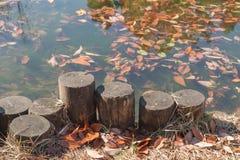 Vieux tronçon se tenant près de l'étang et de la feuille tombée d'automne Image stock