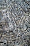 Vieux tronçon superficiel par les agents avec des boucles d'arbre Images stock