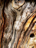 Vieux tronc de pin images libres de droits