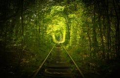 Vieux tunel de forêt et de chemin de fer de l'amour Photographie stock libre de droits