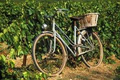 Vieux vélo français dans la vigne Image libre de droits