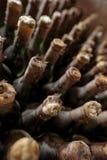 Vieux vieillissement de vin dans la cave photographie stock
