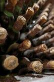 Vieux vieillissement de vin dans la cave photos libres de droits