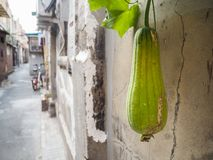 Vieux voisinage traditionnel dans la concession de Français de Tianjin image libre de droits