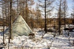 Vieux yurt de mongol et de renne dans la forêt d'hiver, jour ensoleillé photos libres de droits