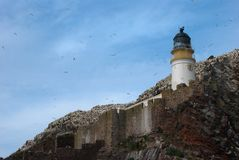 Gannets flying around abandoned lighthouse on Bass Rock North Berwick Scotland royalty free stock photography