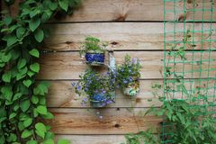 Wooden wall decorated by the pots with blue flowers and other green plants stock photo