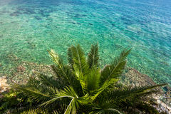 View from above of big palm growing at sea beach Stock Images