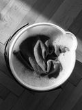 View from above of bucket full with water and cloth Royalty Free Stock Image