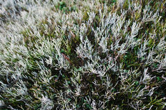 View from above of close up frost pine grass on mountain hill Stock Photos