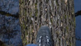 View from above on feet of a person walking on fallen tree trunk. View from above on feet of a person in boots and jeans walking on fallen tree trunk in a river stock video