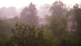 View from above, focus on big drops of rain, city park , spring day, thunderstorm in city, strong wind and rain, a. View from above, city park , spring day stock footage